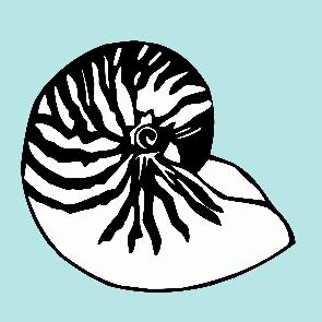 nautilus design