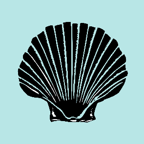 scallop design
